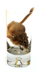 drink with... gerbil