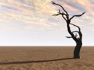 Tree on Desert