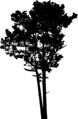 Isolated tree - 3. Silhouette