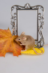 The red mouse and maple leaf