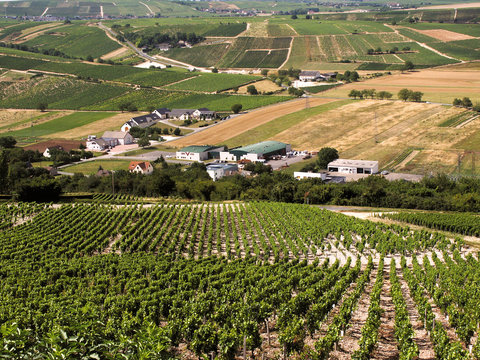 Vineyards in the loire valley france.