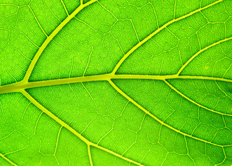 Leaf of a plant on light with a deciduous ornament