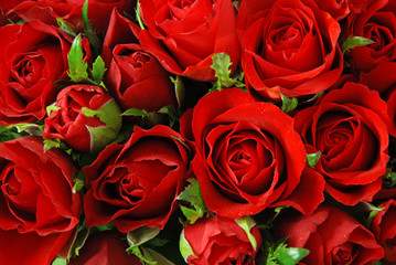 Red roses with leaves background - natural texture of love