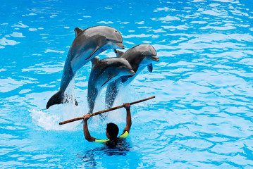 The instructor with his three jumping dolphins.