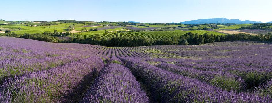panoramique - Champ de lavande en Provence