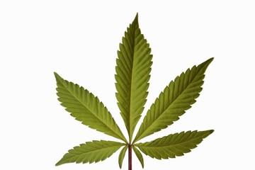 feuille de marijuana