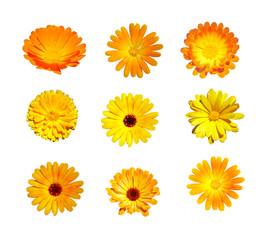 Flowers set isolated on white
