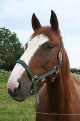 cheval dans son enclos
