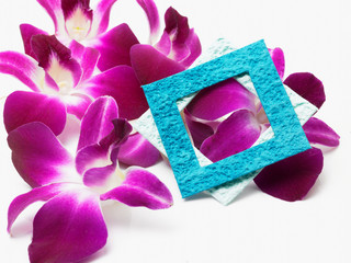 pink flower with blue frame
