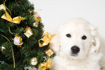 golden with christmass tree