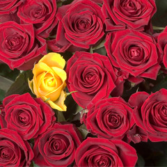 one yellow rose in a bouquet of red roses