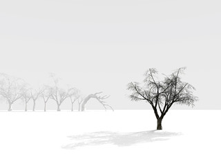 alone winter tree on a background of foggy outlines of trees