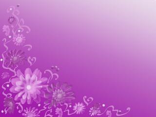 Blume,Hintergrund,violett