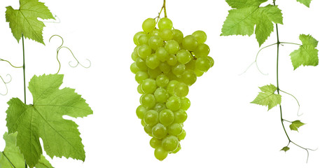 backdrop of grapes and vine-leaves isolated