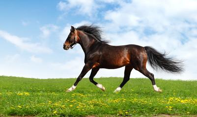 Fotoväggar - arabian horse trots - realistic photomontage