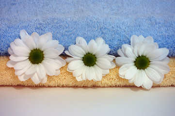 Daisies and Towels