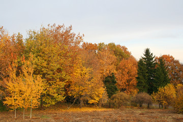 Forest at the autumn. Vivid colors
