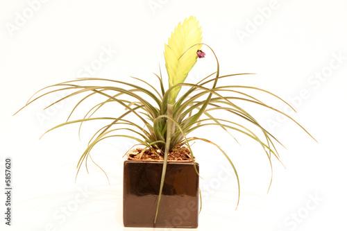 plante exotique dans pot noir photo libre de droits sur la banque d 39 images image. Black Bedroom Furniture Sets. Home Design Ideas