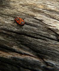 Insecte sur un tronc d'arbre
