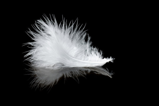 white feather with reflection on black background