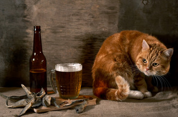 The cat looks at beer and fish