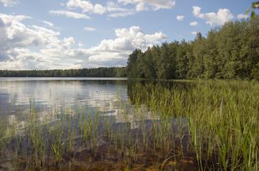 Lake in-field. A bright summer sun. White clouds.
