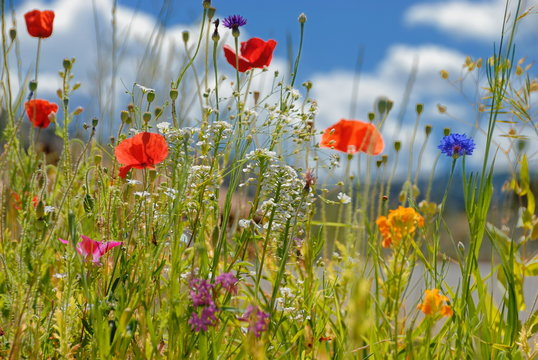 Colorful wildflowers