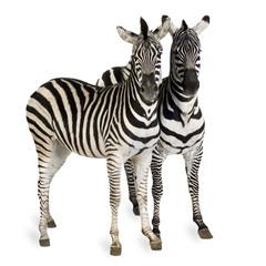 Poster Zebra Zebra