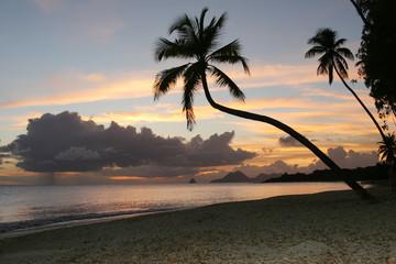 plage des salines, Martinique