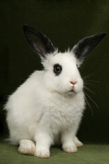 close up portrait of very cute rabbits