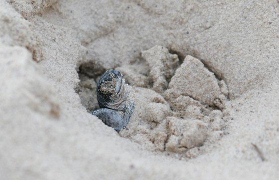 birthday: leatherback sea turtle