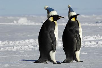 Antarctic penguin pair with caps