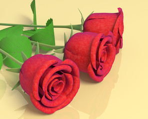 roses for great celebrations and love
