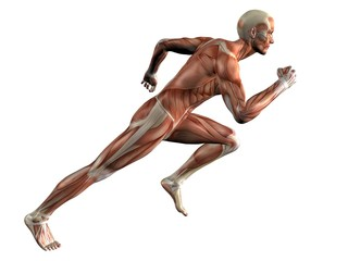 Running Muscle Man