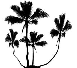 île aux cocotiers