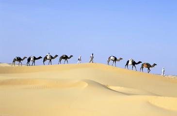 Foto op Aluminium Algerije CAMEL caravan