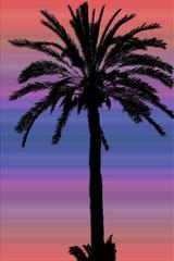 dattier sur fond de nuit tropicale