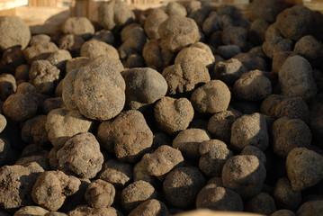 truffes noires du périgord