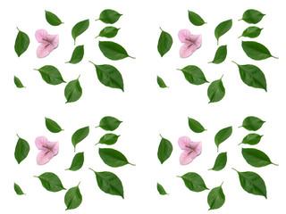 feuilles et fleurs du bougainvillée rose pastel