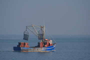 bateau de pêche,coquille saint-jacques