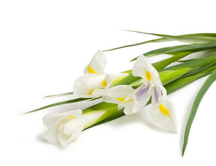 Bouquet of three white iris on white background
