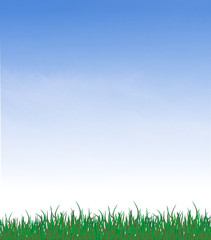 green grass on a background of summer sky is represented