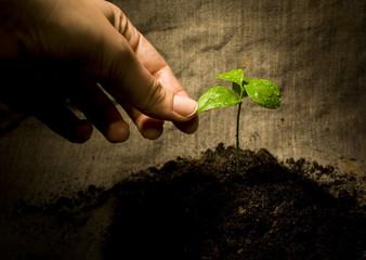 Rural natural image: female finger holding the green plant