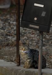 Kitten under the mailbox