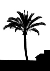 vector map of a Palm Tree Silhouette