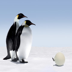 Penguin Mother and Father with hatching baby