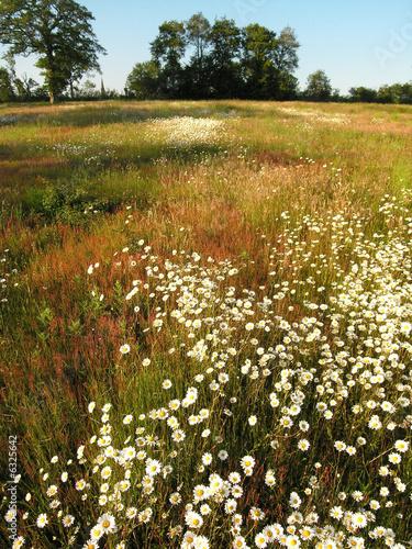 paysage fleuri 2 photo libre de droits sur la banque d 39 images image 6325642. Black Bedroom Furniture Sets. Home Design Ideas