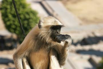 thinkinge ape