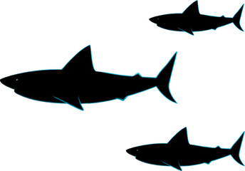 Sharks illustration