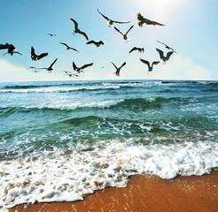 Keuken foto achterwand Noordzee Sea gulls